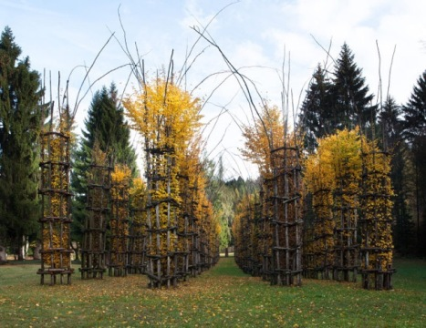 giuliano-mauri-arbres-cathedral-cattedrale-vegetale-foret-2
