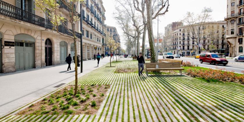 Comme un arbre dans la ville Site et Cité Arbre urbain fosse souffrance biologie naturel